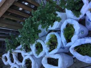 Feed bag garden - lessons learned in action